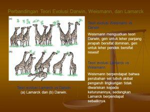 Perbandingan Teori Darwin Dan Lamarck Sejatinya, evolusi adalah perubahan yang terjadi selama perlahan-lahan dan membutuhkan waktu jutaan tahun untuk berubah secara sempurna. Bahkan terdapat cara berfikir manusia secara fisik, bentuk fisik yang bervolusi dengan waktu yang ditentukan. Apalagi pelajaran Biologi menegaskan bahwa kehidupan di dunia berkalitan erat dengan teori darwin dan teori Lamarck, walaupun keduanya adalah bapak evolusi besar, terdapat beragam perbedaan loh. Alhasil sebagian orang mempercayai evolusi Darwin dan sebagian lagi mempercayai evolusi Lamarck. Perbandingan Teori Evolusi Darwin Dan Lamarck Walaupun zaman sudah serba canggih, teori evolusi masih menjadi perdebatan manusia loh. Padahal dahulu sudah ada bapak evolusi yang terkenal di seluruh dunia, yaitu Charles Robert Darwin Dan Lamarck, keduanya sama-sama kuat mengkaji evolusi melalui sudut pandang yang diyakininya benar. Alhasil sudut pandang mereka membuat perbedaan teori evolusi yang mereka ciptakan. Namun baik Darwin maupun Lamarck memiliki teori evolusi yang menarik dan tampak bernilai tinggi bahwa teori yang disampaikannya benar sesuai dengan kondisi makhluk hidup saat mereka masih hidup. Berikut ada perbandingan teori Darwin dan Lamark yang dapat dijadikan wawasan, diantaranya adalah: Sudut Pandang Teori Darwin Sudut pandang teori Darwin semakin dikenal saat ia berkunjung ke pesisir Amerika Selatan, tepatnya di kepulauan Galapagos. Di pesisir laut tersebut ia menemukan variasi tumbuhan maupun hewan dengan jelas secara fisik dan kepribadian. Salah satunya adalah kura=kura Galapagos dan burung Finch dimana burung finch termasuk spesies pemakan biji di Amerika Serikat yang dapat bermigrasi untuk mencari makan di tempat berbeda. Sebagian burung mencari makan dengan bijian-bijian dan sebagiannya lagi ke tempat yang dipenuhi serangga. Perbedaan mencari makan burung tersebut membuat spesies burung finch akhirnya beradabtasi dengan lingkungan dan pakannya. Alhasil mereka seiirng berjalannya w